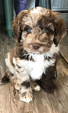 Super Cute Puppies, Cute Baby Dogs, Cute Little Puppies, Cute Dogs And Puppies, Cute Little Animals, I Love Dogs, Cute Pups, Doggies, Fluffy Puppies