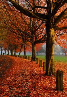 Colours of Fall - Vancouver, British Columbia.