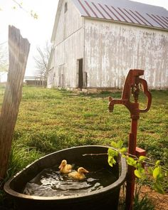 Water pump on the farm with ducklings. Water pump on the farm with ducklings. Country Barns, Old Barns, Country Life, Country Living, Country Roads, Country Charm, Future Farms, Country Scenes, Farms Living