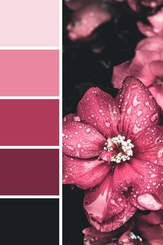 I think this one would work great for any kind of sensual, luxury product Color Schemes Colour Palettes, Colour Pallette, Color Palate, Color Combos, Pink Palette, Decoration Palette, Color Harmony, Design Seeds, World Of Color