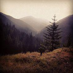 Photo by shwoodshop • Instagram