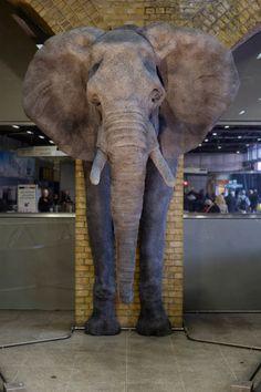 Elephant (2000-2016)