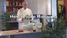 How to Juice with Medical Marijuana - Weed TV - Eating or juicing raw fresh Marijuana is very  effective medicinally. This method does not get you high but marjuana in its raw form restores balance and is the most nutritious vegetable in the world. Marijuana is a perfect protien with ten amino fatty acids. Check out my video page for instructional videos on how to make CannaButter, CannaOil, CannaHoney, Rick Simpsons Hash Oil, and Marijuana Tinctures.
