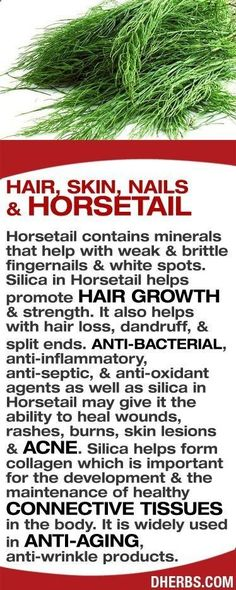 Tips for Anti Diet - Horsetail contains minerals that help with weak & brittle fingernails. Silica in Horsetail helps hair growth & strength. Also helps with hair loss, dandruff & split ends. Anti-bacterial, anti-septic, & anti-oxidant agents as well as s Herbal Remedies, Health Remedies, Home Remedies, Healing Herbs, Medicinal Plants, Wound Healing, Natural Medicine, Herbal Medicine, Natural Cures