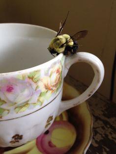 Happy bumble bee.