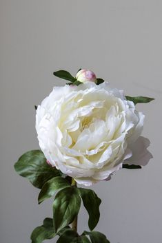 Our beautiful artificial peony stem has a wonderfully full head of petals. A gorgeous life-like faux flower which looks equally stunning as a single stem as it does in a flower arrangement