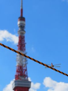 熊谷正の『美・日本写真』(2015/11/24 更新)写真① 写真/田中博