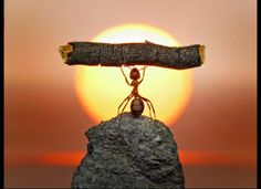 Andrey Pavlov, Russian Photographer, Takes Fairytale-Like Pictures Ants (PHOTOS)