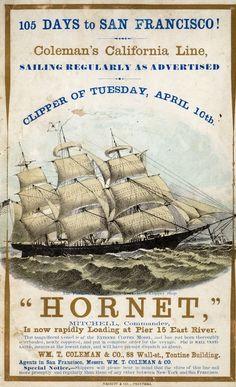 Hornet – an American clipper ship of the 1850s http://www.wikiwand.com/en/Clipper