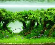 Planted aquariums always look the coolest; especially with tetras.