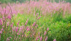 The top 10 unwanted garden plants