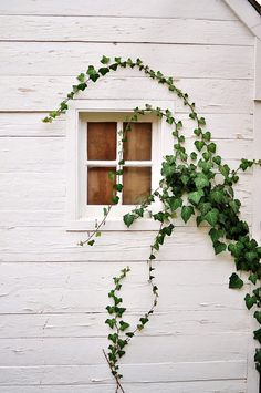 Ivy on a white rustic facade Fachada Colonial, Foto Picture, Plant Wall, Home Design, Windows And Doors, Decoration, Interior And Exterior, Exterior Windows, Cottage Exterior