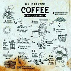 Illustrated Coffee processing.$