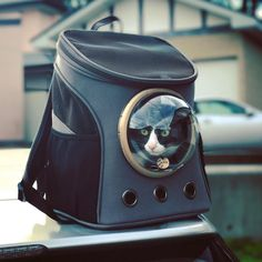 Petzilla Pet Carrier Canvas Backpack for Small Dogs And Cats, Transparent and Breathable Bubble >>> More info could be found at the image url. (This is an affiliate link) #CatCagesCarrierandStrollers