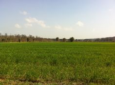 Riserva naturale Abbadia di #Fiastra.