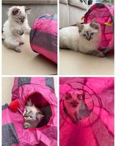 Pretty in Pink… – funny cats Copy Cat Chic, Cat Tat, Cat Garden, Cat Climbing, Anime Cat, Cat Scratching, Cat Furniture, Cat Shirts, Cats Of Instagram