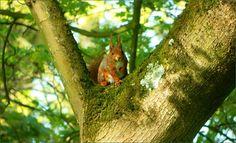 Eichhörnchen im Baum - Jahreszeiten - Galerie - Community