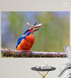 Ijsvogel jonglerend met vis op boomtak. Kleurrijke portretfoto in herfstkleuren.<br><br>De ijsvogel (Alcedo atthis) is een waterminnende vogel uit de familie van ijsvogels (Alcedinidae). Het is een opvallende verschijning door zijn afstekende blauwe en oranje kleuren, maar ook een zeer schuwe soort die zich weinig laat zien. Alcedo atthis is de enige ijsvogelsoort die tot in noordelijk Europa voorkomt inclusief Nederland en België, althans de ondersoort Alcedo atthis ispida. De meeste ijsvogels Canvas, Wall, Prints, Poster, Animals, Europe, Tela, Animales, Animaux
