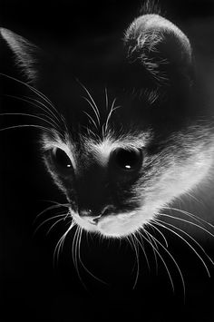 Are Cats Nocturnal - Cat Photography - Chat Cute Kittens, Cats And Kittens, I Love Cats, Crazy Cats, Beautiful Cats, Animals Beautiful, Beautiful Creatures, Animals And Pets, Cute Animals
