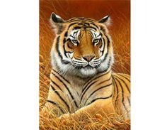 All images are the original artwork of nature artist and wildlife artist Dr. Jeremy Paul and are protected by international copyright laws. Tiger Pictures, Animal Pictures, Animal Paintings, Animal Drawings, Beautiful Cats, Animals Beautiful, Animals And Pets, Cute Animals, Big Cats Art