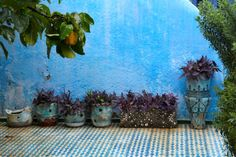 Plants on an outdoor terrace #Morocco