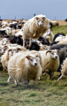 Dynamicmeansenergetic, capable of action and/or change, or forceful. You can see that very well in this picture of a jumping sheep.