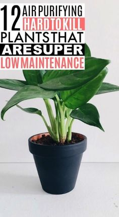 These 12 air purifying plants are THE BEST! I'm so glad I found these AWESOME home hacks! Now I have some great ideas for low maintenance air purifying plants for home decor! Tall Plants, Indoor Plants, Indoor Garden, Potted Plants, How To Look Pretty, How To Look Better, Low Maintenance Plants, Spider Plants, Hanging Pots