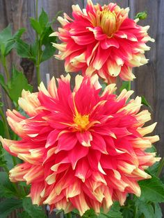 Top 10 Best Flowers for a Rainbow Garden - Page 3 of 10 - Top Inspired