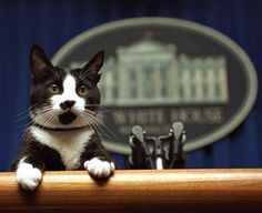 Известные политики и их четвероногие любимцы