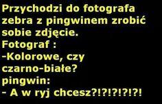 ✮♥✮✤✮♥✮✤✮♥✮✤✮♥✮✤ Polish Memes, Weekend Humor, Funny Memes, Jokes, Good Mood, Just Love, Everything, Texts, Haha
