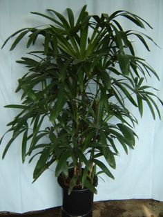 As melhores flores e plantas para esquecidos de plantão terem em casa. Cut My Hair, Wabi Sabi, House Plants, Natural, Environment, Tropical, Green, Flowers, 30
