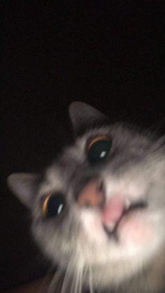 cat wallpaper I always thought Cat selfies were fa - cat Cute Animal Memes, Cute Memes, Cute Funny Animals, Cute Baby Animals, Cute Cats, Cute Cat Wallpaper, Funny Iphone Wallpaper, Funny Wallpapers, Cartoon Wallpaper