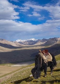 Treck in the pamir mountains with yaks, Big pamir, Wakhan, Afghanistan by Eric Lafforgue