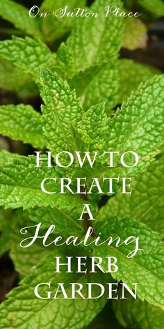 Create a Healing Herb Garden | Six herbs you can grow yourself that when used fresh or dried, have amazing health benefits.  #Sponsored