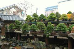 Kuno Kobayashi's Bonsai Museum |