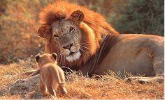 Il ruggito del leone   Blog Mammole