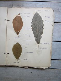 1930s botany notebook - this would be a good idea to track the different stages of plants - I have, in the past, accidentally pulled out young perennials thinking that they were weeds. It's hard to find a guide that shows all life stages of any given plant, so why not make my own!