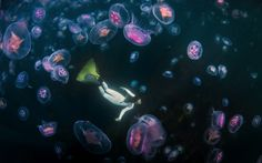 freediver swimming with moon jellyfish ireland outdoor photography competition