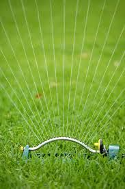 """Run your sprinkler and see how long it takes to get a half inch of water in the can – just like a rain gauge. Usually it's about 30 minutes. So 20 minutes, 3 times per week will get an inch of water on your lawn, and 30 minutes 3 times per week will get 1 ½"""" down. Water long enough to moisten the soil about 6 inches down, which is the depth of a healthy grass root system. To see how far the moisture seeps down, check the soil after 15 minutes during the first watering."""