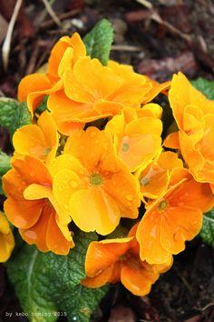 Bunt ist die Welt... der Frühling erwacht... #Frühling #spring #Ostern #easter #Blumen #flowers