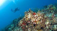 Dykning på St. Lucia
