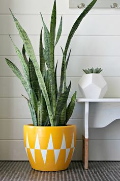 If you've been eyeing a designer planter that is WAY out of your budget, just bust out the spray paint and create your very own knock-off.