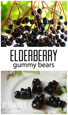 Elderberry benefits: These berries fight colds, flu, and bacterial infections. M… Elderberry benefits: These berries fight colds, flu, and bacterial infections. Make these elderberry gummies for your family's health. Elderberry Benefits, Elderberry Gummies, Elderberry Recipes, Elderberry Syrup, Cold Remedies, Herbal Remedies, Natural Remedies, Healing Herbs, Medicinal Herbs