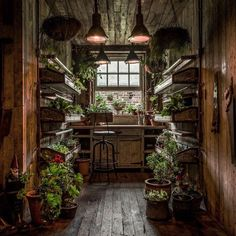To spend time in here, pottering alone, would to be in Heaven.  I know it would have a woody sheddy smell too..in a good way.