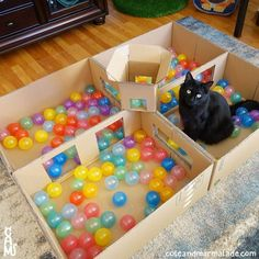 Cat Ball Pit … Ok so I get that this person made this for their cat but hear m… – Catroom - Katzen Diy Cat Toys, Homemade Cat Toys, Diy Pour Chien, Cat Hacks, Cat Diys, Cat Playground, Cat Enclosure, Cat Room, Animal Projects