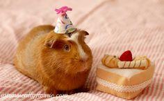 cute+pigs | Intrinsically Florrie: Creepy Cute and a Guinea Pig Birthday