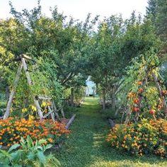 Potager Garden, Veg Garden, Garden Cottage, Edible Garden, Garden Beds, Garden Landscaping, Vegetable Gardening, Biodynamic Gardening, Landscaping Borders