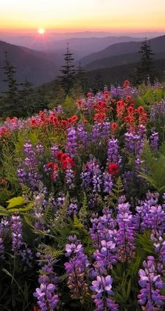 Spring flowers... Cascade Mountains, Washington state