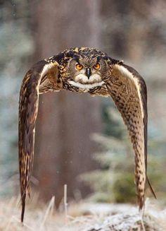 Honed in on prey....