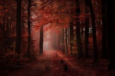 I See Fire by Nelleke Pieters on 500px